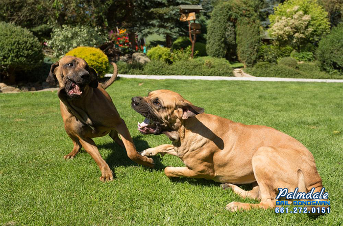 The Penalties of Dog Fighting in California