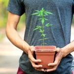 Transporting Marijuana in California