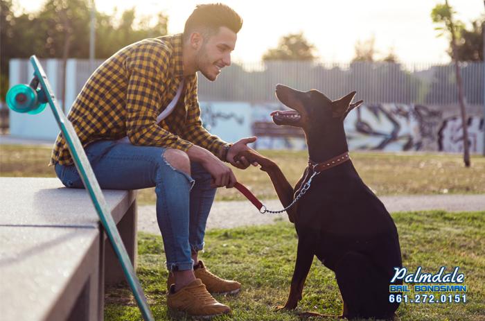california leash laws